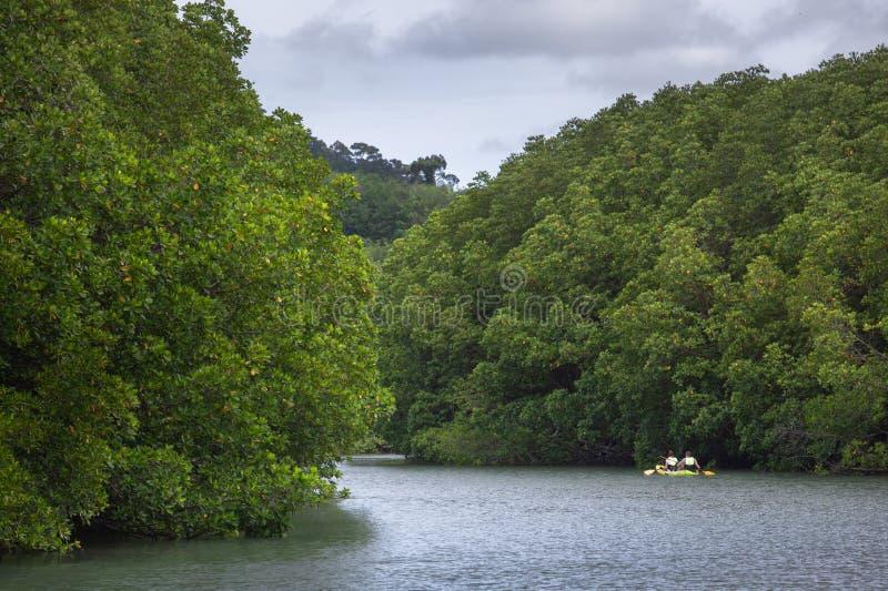 Kayaking in mangrovebos bij het Koh Chang-eiland stock afbeeldingen