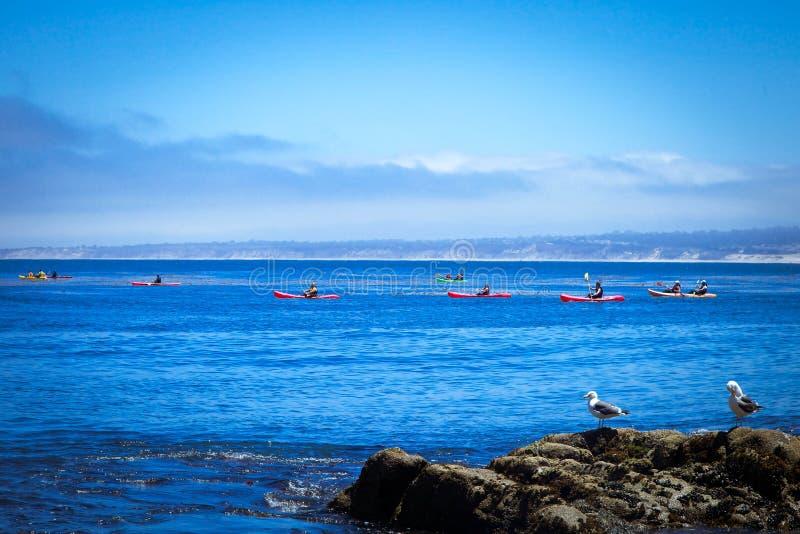 Kayaking na baía de Monterey fotos de stock