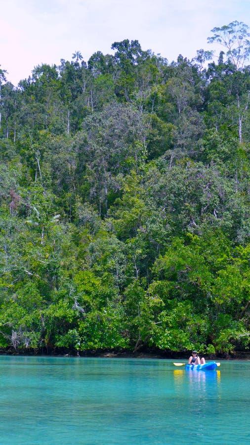 Kayaking op Mangrovegebied, West-Papoea, Raja Ampat, Indonesië stock foto's