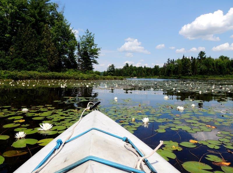 Kayaking på en nordlig sjö royaltyfria bilder