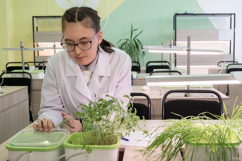 2019-09-01, Kazachstan, Kostanay Rosnąć rośliny hydroponiką w szkoły średniej laboratorium klasie Młoda dziewczyna uczeń w szkłac obrazy stock