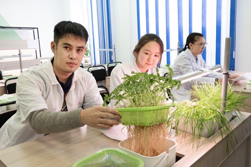 2019-09-01, Kazajistán, Kostanay hydroponics Laboratorio de la escuela El individuo muestra los brotes con las raíces Plantas ver fotografía de archivo libre de regalías