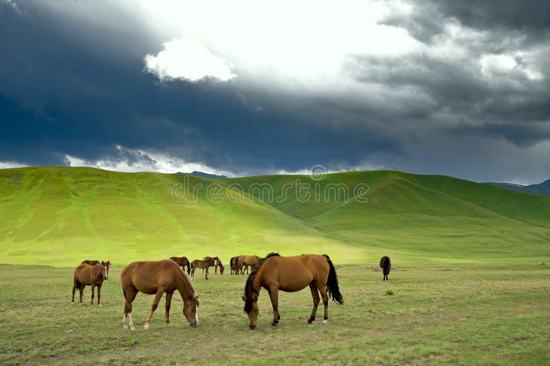 kazakh del cavallo fotografia stock