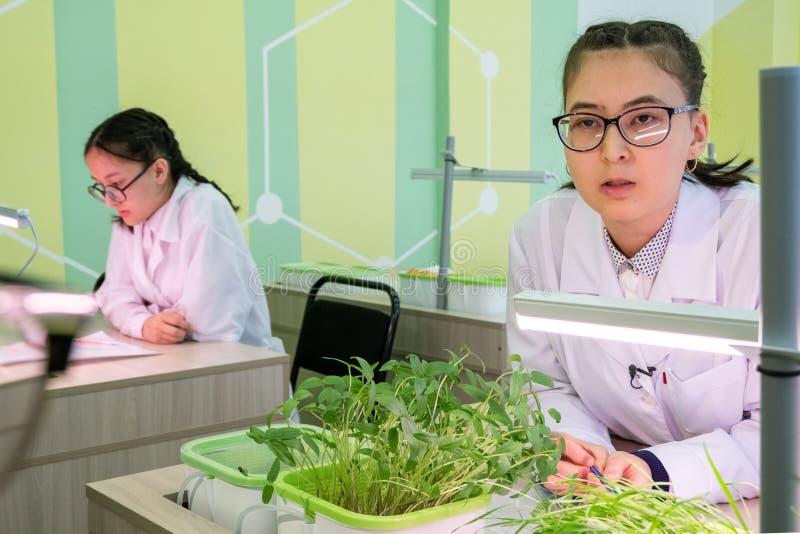 2019-09-01, Kazakhstan, Kostanay hydroponics L'écolière avec des verres et un manteau blanc parle des lentilles et des pousses de photographie stock