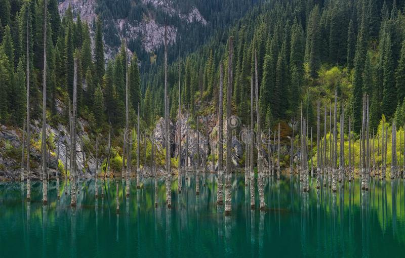 Kazakhstan, The Sunken Forest Of Mountain Lake Kaindy.Trunks Of Spruce Trees In Water.Natural Sight Of Kazakhstan In Tyan-Shan Mou stock photos