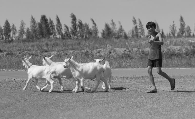Kazan Ryssland - juli 14, 2013: Oidentifierade barn med getter i Tatar by royaltyfri fotografi