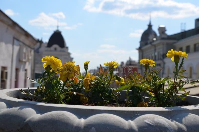 kazan Wiosna Uliczny flowerbed fotografia royalty free