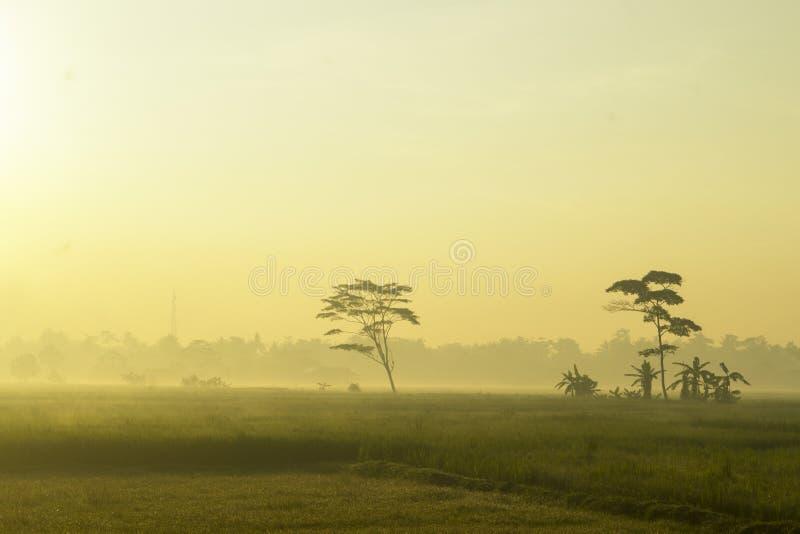 KEBUMEN - het zonlicht in de ochtend doordringt de mist royalty-vrije stock afbeeldingen