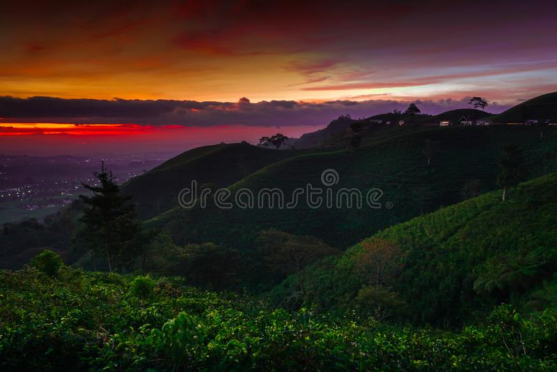 Kebun het kemuning - zonsondergang in het theelandbouwbedrijf royalty-vrije stock afbeelding