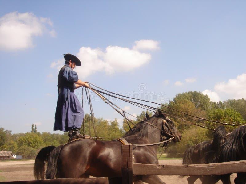 Kecskemét, condado del cs-Kiskun del ¡de BÃ, Hungría: Gran viaje llano de Puszta con la demostración tradicional del caballo imagen de archivo