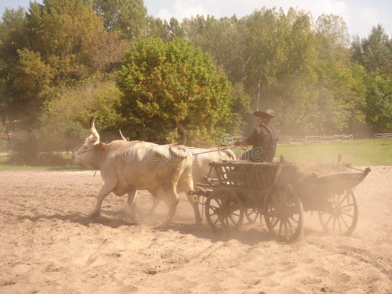 Kecskemét, condado del cs-Kiskun del ¡de BÃ, Hungría: Gran viaje llano de Puszta con la demostración tradicional del caballo fotografía de archivo