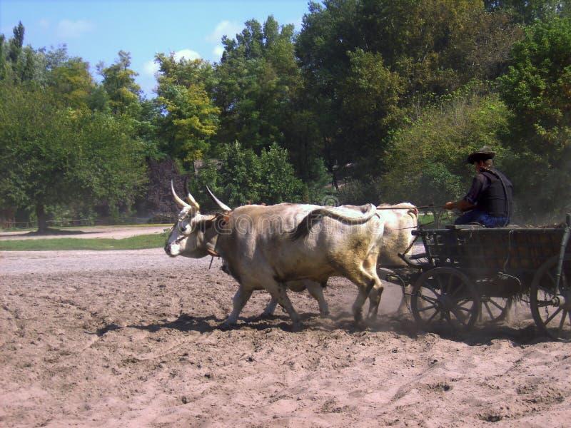 Kecskemét, condado del cs-Kiskun del ¡de BÃ, Hungría: Gran viaje llano de Puszta con la demostración tradicional del caballo imagen de archivo libre de regalías