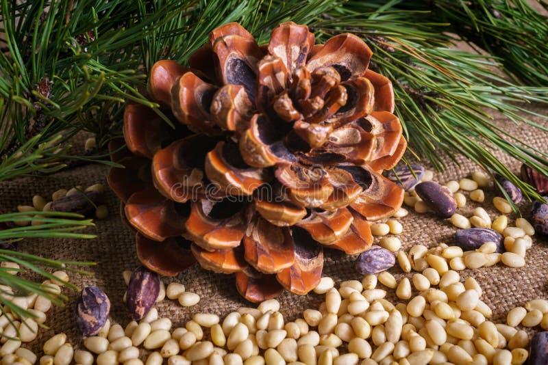 Kedarkona med skalade nötter på bordet royaltyfri fotografi