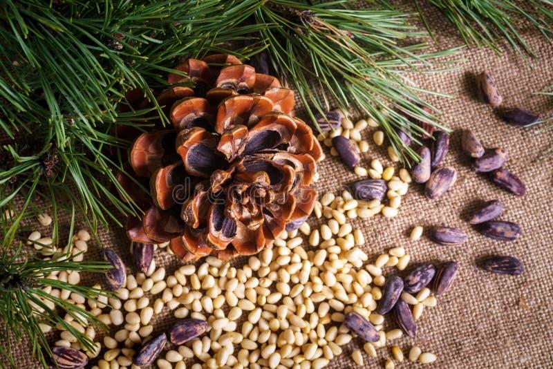 Kedarkona med skalade nötter på bordet royaltyfria bilder