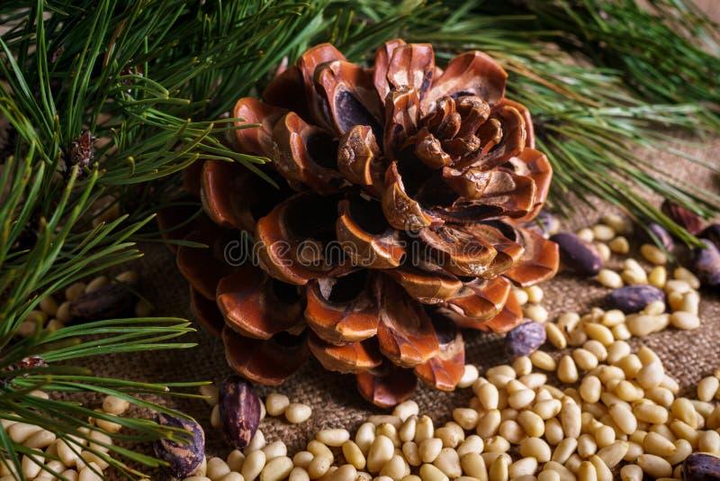 Kedarkona med skalade nötter på bordet royaltyfri bild