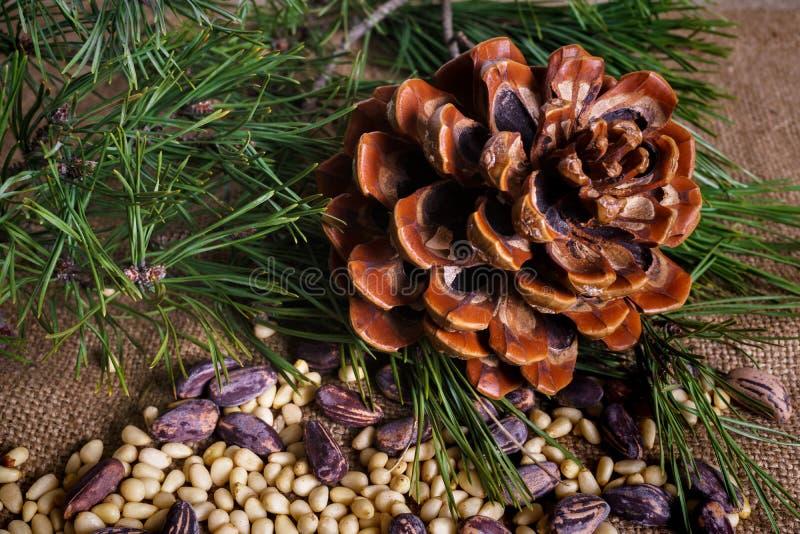 Kedarkoner med nötter på bordet royaltyfria foton