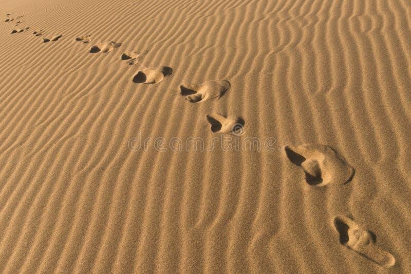 Kedja av barfota fotspår på sand Mänskliga fotspår på sandbakgrund Fotmoment som bort går royaltyfria bilder