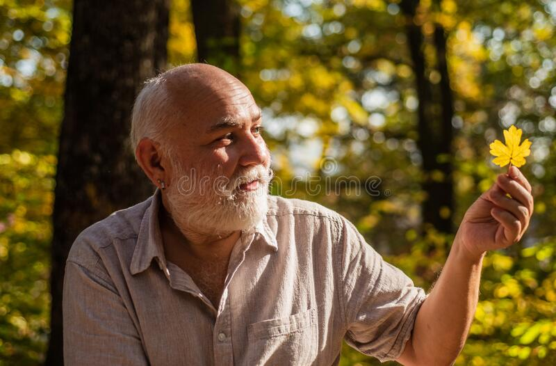 Keep cheerfulness. Pensioner hiking in forest on sunny autumn day. Happy man enjoy autumn nature. Old bearded man. Collect leaves. Bearded grandfather relaxing royalty free stock photography