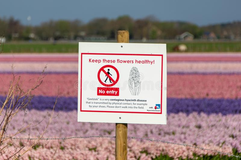 Sign by the hyacinth Holland stock photo