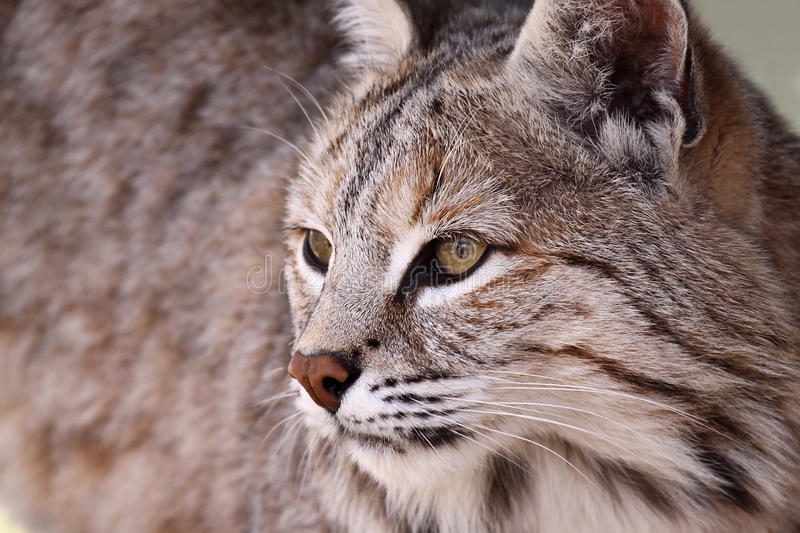 Download Keeping An Eye On You stock photo. Image of watching, wildlife - 9521844