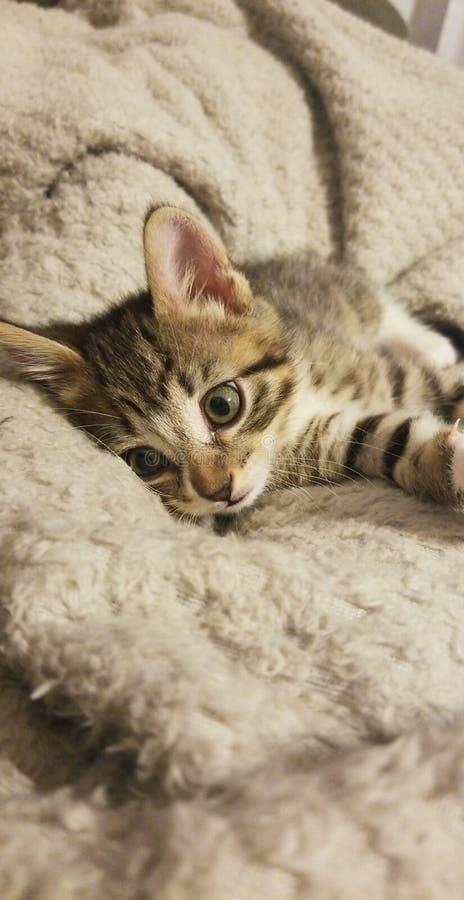 Keerah милый котенок стоковое фото rf