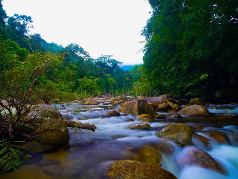 Download Keereewong стоковое фото. изображение насчитывающей природа - 101210872