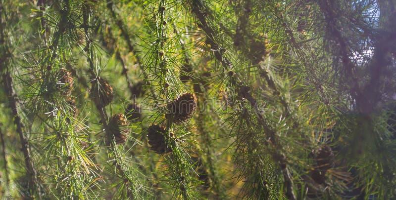 Kegel im Sommerwald lizenzfreie stockfotos