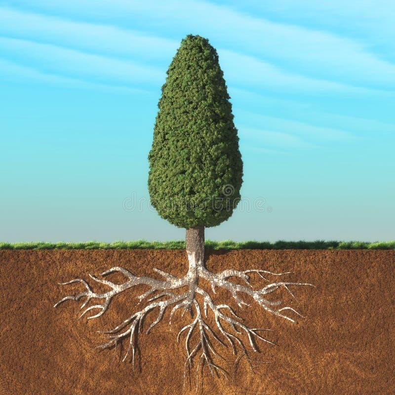 Kegelbaum mit Wurzel lizenzfreie abbildung