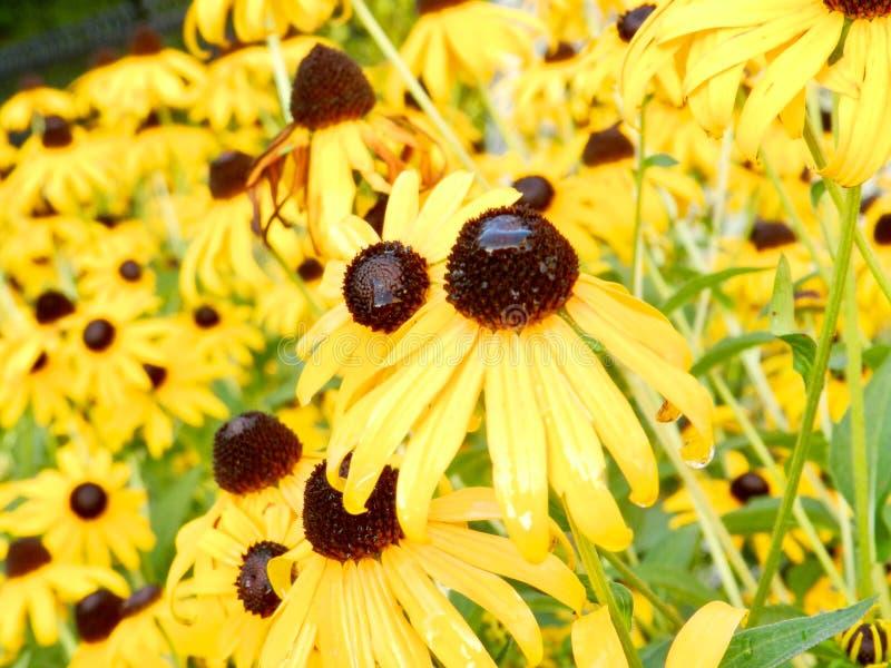 Kegelbloemen royalty-vrije stock afbeeldingen