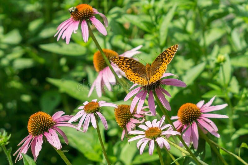 Kegelblumen und -freunde lizenzfreies stockbild