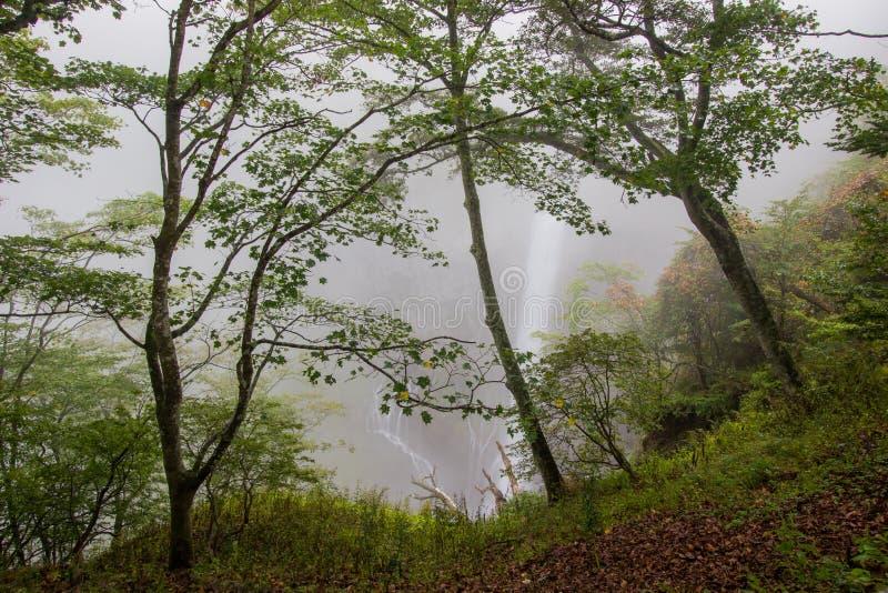 Kegon faller i misten, den Nikko nationalparken nära staden av Nikko, Tochigi Japan royaltyfri foto