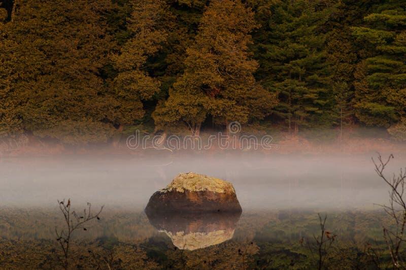 Kei en Noordelijk Wit Cedar At Rich Lake, Adirondack Forest Preserve, New York stock fotografie