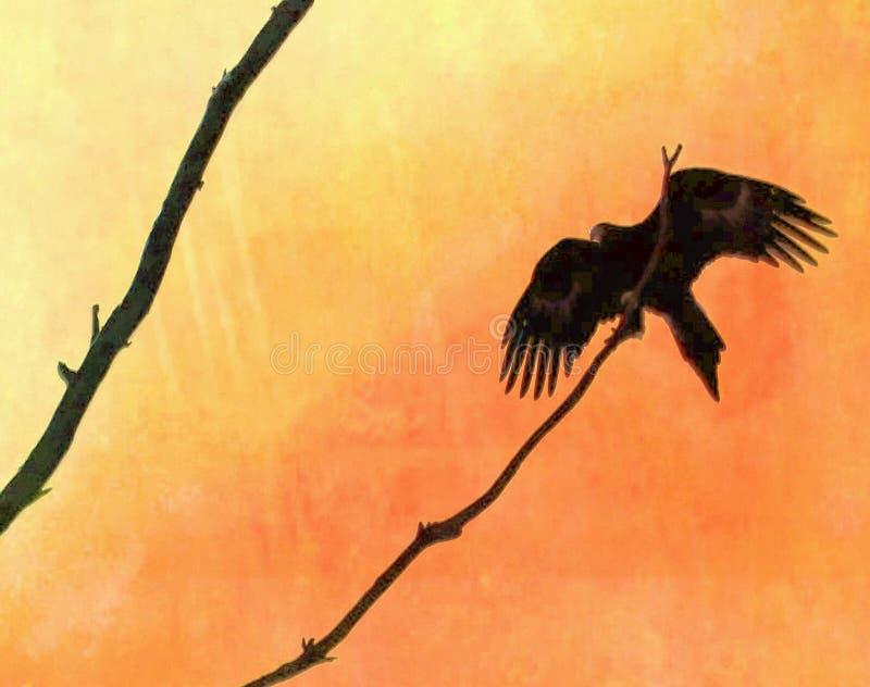 Keil angebundenes Eagle im Eukalyptus lizenzfreie stockfotos