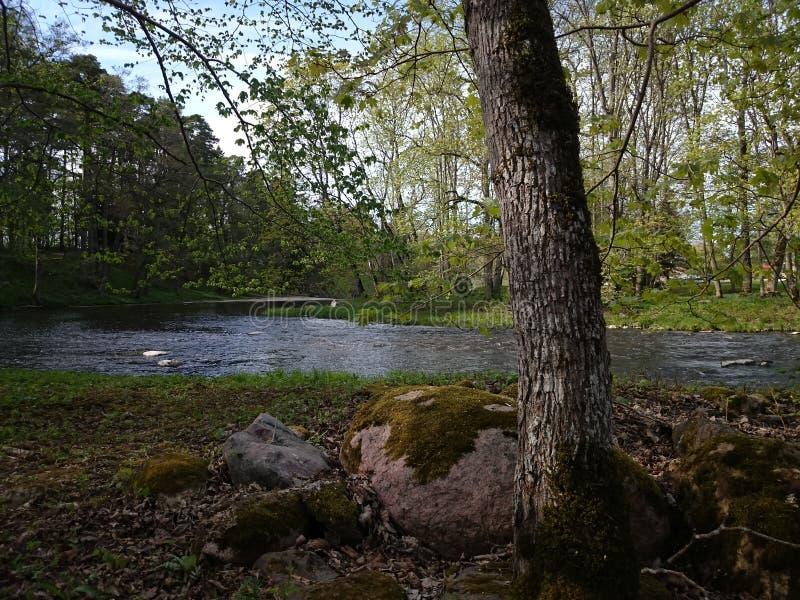 Keila flod royaltyfri foto