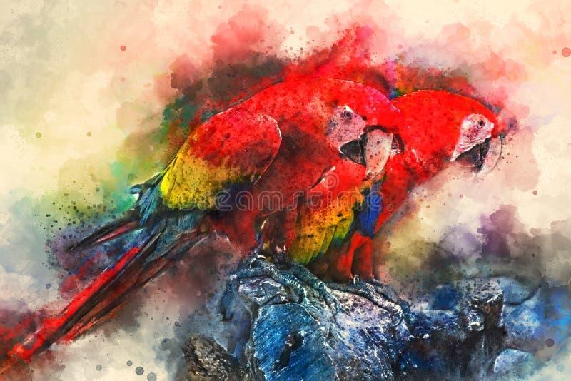 Keilschwanzsittich-Papagei digitale Illustration basiert auf ursprünglichem Foto lizenzfreies stockbild