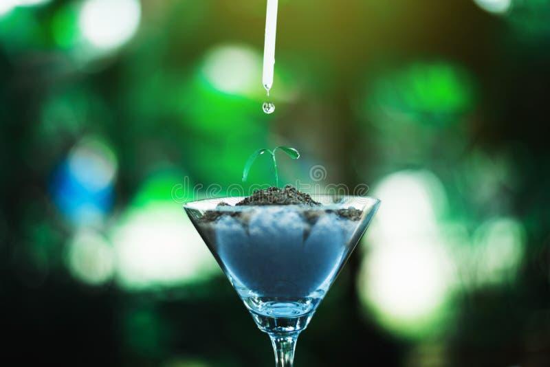 keimen Sie das Wachsen im Glas mit Wassertropfen stockfoto