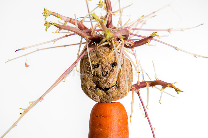Keimungskartoffelgesicht auf Karotte stockfotografie