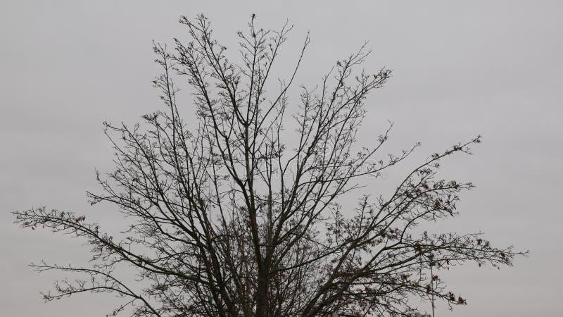Kein Blattbaum stockfotos