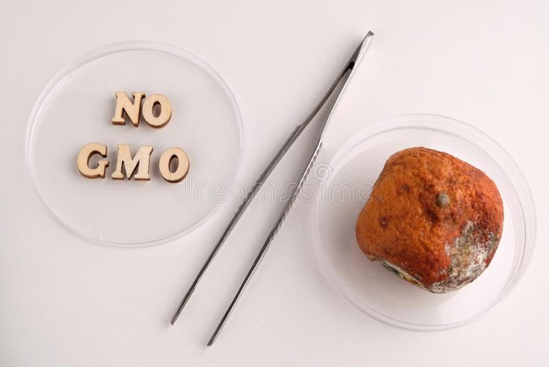 Kein GVO Zwei Petrischalen und Metallpinzette in Form eines Prozentsatzzeichens H?lzerne Buchstaben und verdorbene Tangerine Konz lizenzfreie stockbilder