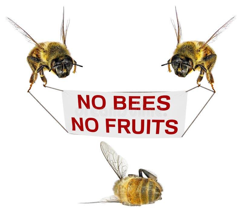 Keine Bienen - keine Frucht stockfoto