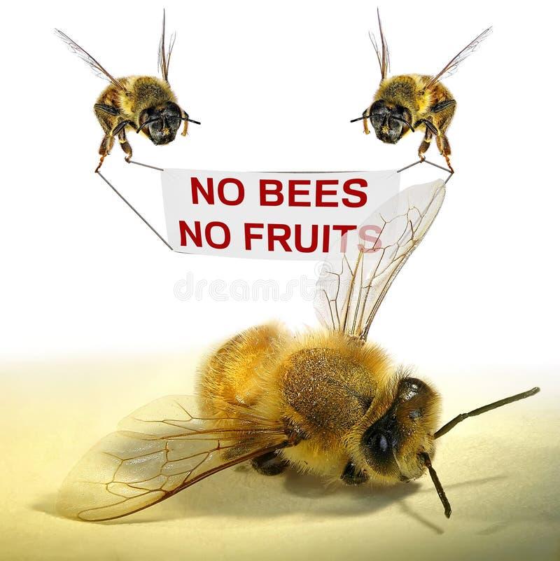 Keine Bienen - keine Frucht stockfotografie