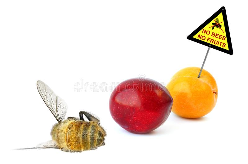 Keine Bienen - keine Frucht stockbilder