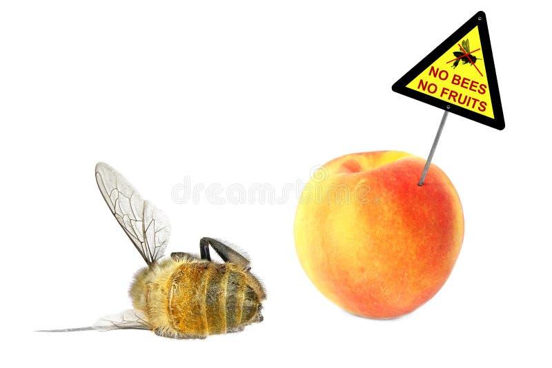 Keine Bienen - keine Frucht lizenzfreie stockfotos