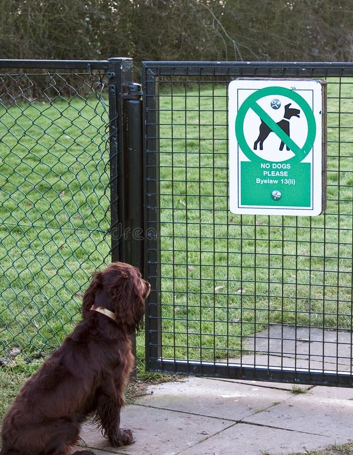 Keine Hunde erlaubt lizenzfreies stockfoto