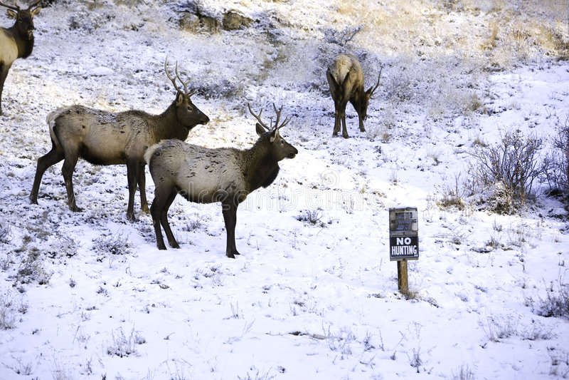 Keine Jagd lizenzfreies stockbild