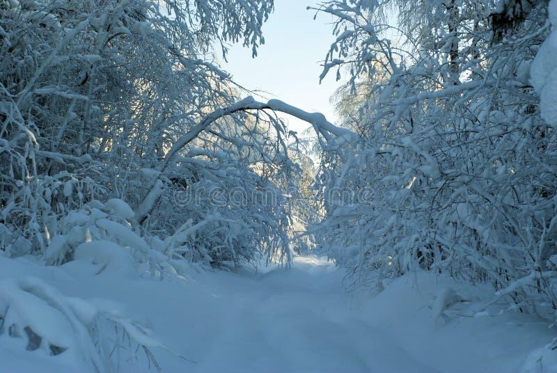 Keine Weise nach Schneefällen stockfoto