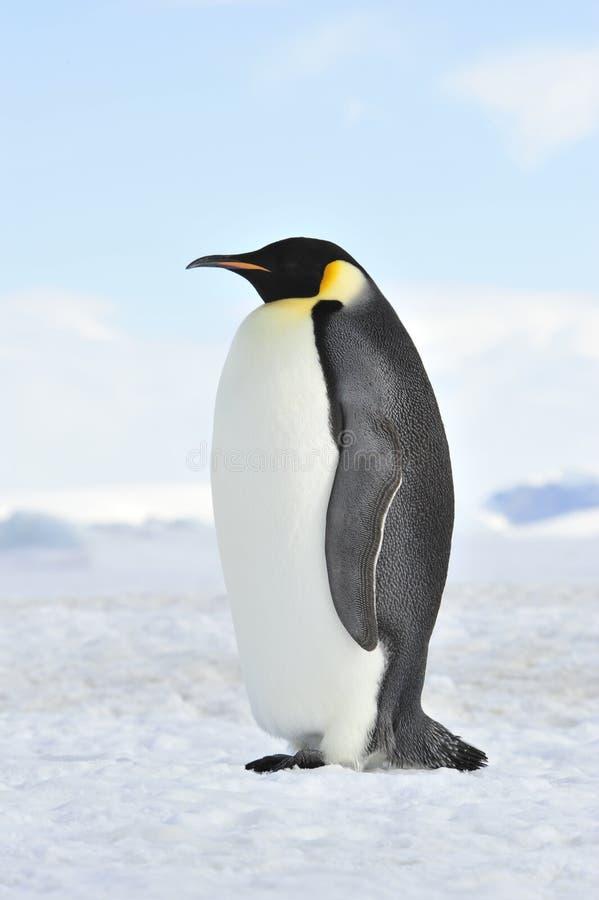 Keizerpinguïn op de sneeuw stock afbeelding
