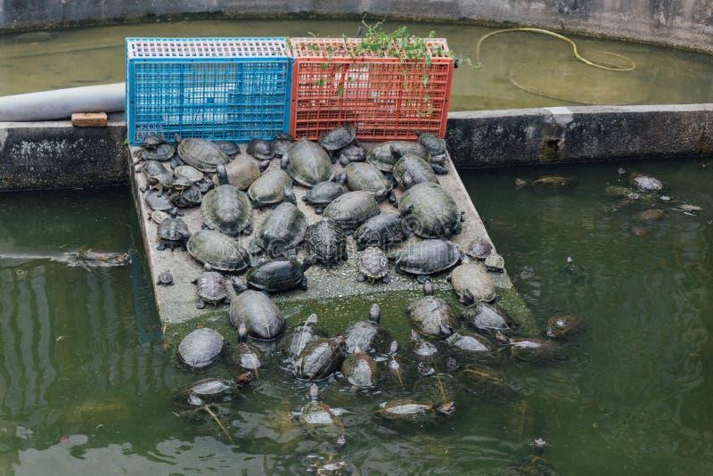 Kek Lok Si寺庙的乌龟是佛教寺庙在槟榔岛,并且是其中一个在海岛上的最响誉的寺庙 免版税库存图片