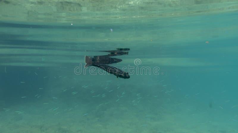 Kekova de la playa en Turquía, lugar del día de fiesta, pescado en el agua, no conozco el género foto de archivo
