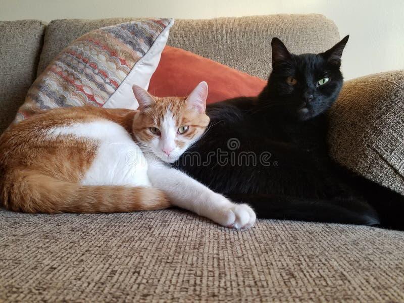 Kela katter på soffan fotografering för bildbyråer